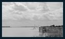 Estuaire de la Gironde_Garonne_15