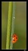 Insectes divers_125