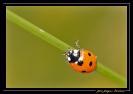Insectes divers_126