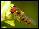 Insectes divers_127