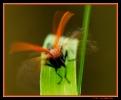 Insectes divers_128