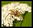 Insectes divers_130