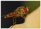 Insectes divers_131