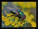 Insectes divers_133