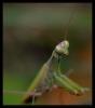 Insectes divers_135