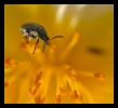 Insectes divers_138