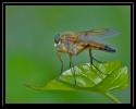 Insectes divers_143