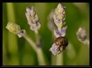 Insectes divers_147