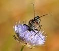 Insectes divers_150