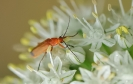 Insectes divers_151