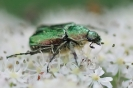 Insectes divers_156