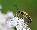 Insectes divers_160