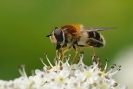 Insectes divers_161