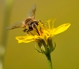 Insectes divers_162