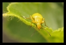 Insectes divers_163