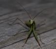 Insectes divers_167