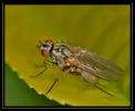 Insectes divers_168
