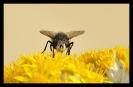 Insectes divers_172