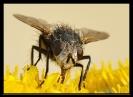 Insectes divers_173