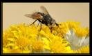 Insectes divers_174