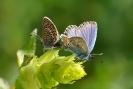 Papillons_118