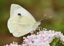 Papillons_125