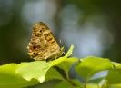 Papillons_129