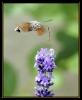 Papillons_133