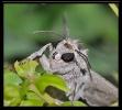 Papillons_134