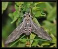 Papillons_135