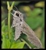 Papillons_140