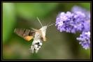 Papillons_141
