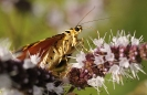 Papillons_142