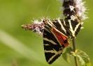 Papillons_143
