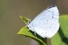 Papillons_144