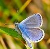 Papillons_63