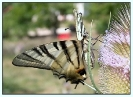 Papillons_66