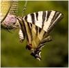 Papillons_67