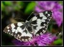 Papillons_70