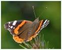 Papillons_71