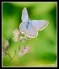 Papillons_72