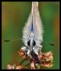 Papillons_74