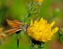 Papillons_76