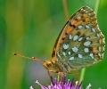 Papillons_80