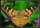 Papillons_82