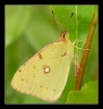 Papillons_83