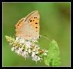 Papillons_84