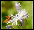 Papillons_85