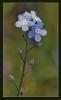 Fleurs_138