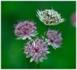 Fleurs_141